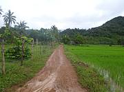 Access road to the farm..