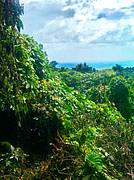 Lot K341, Koro Island, Fiji. Tropical paradise lot for sale, rural setting. Ocean view, off-grid. See more photos and a video at the website...