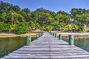 Dock View to the Resort - Jungle & Tropical Gardens..